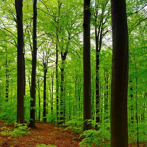 Backyard Forest Stewardship : Managing Forests Saves Forests