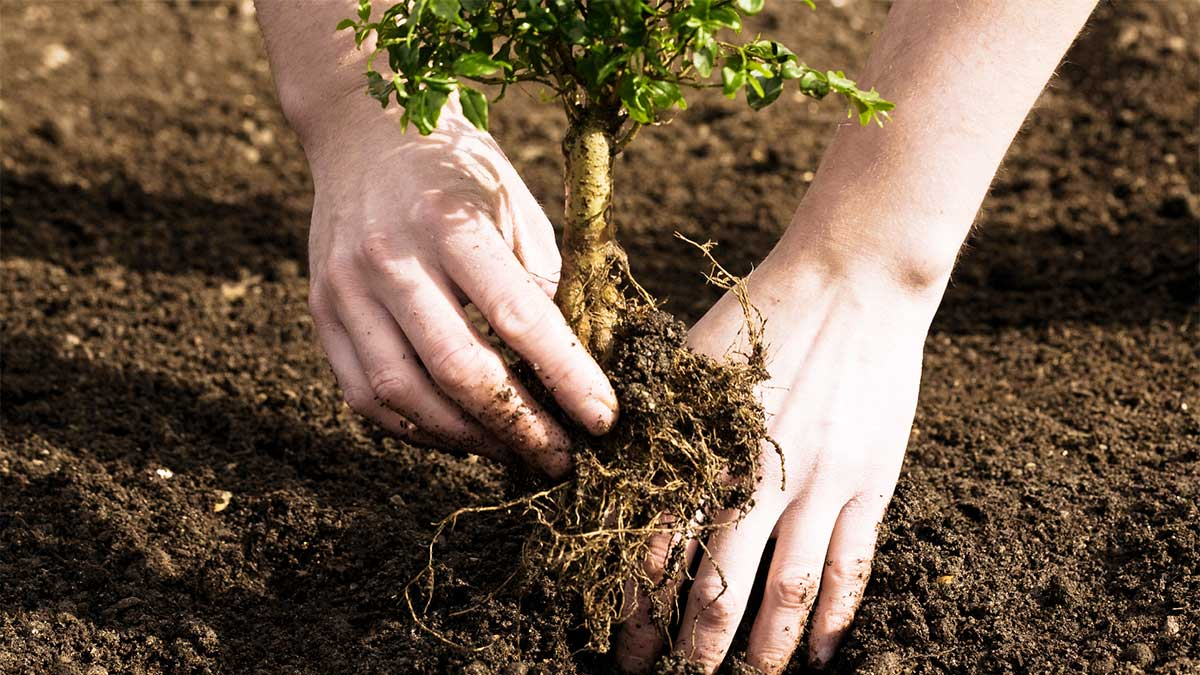 A new Filipino law requires all students to plant 10 trees in order to graduate