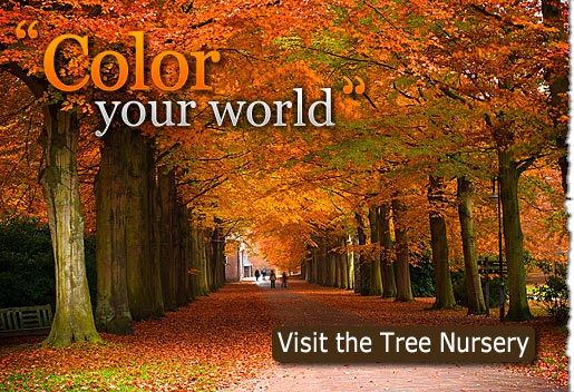 Color Your World. Visit the Tree Nursery Today