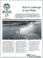 How to Landscape to Save Water