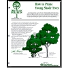 How to Prune Young Shade Trees