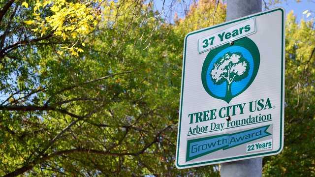 Become a Tree City USA® Community