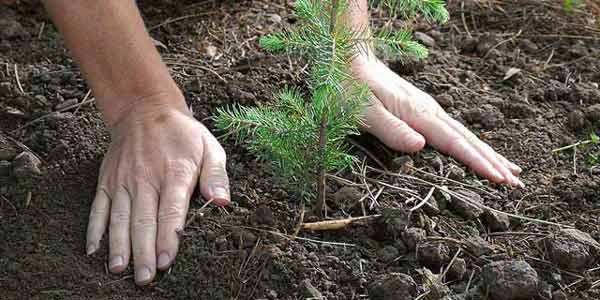tree planting research paper