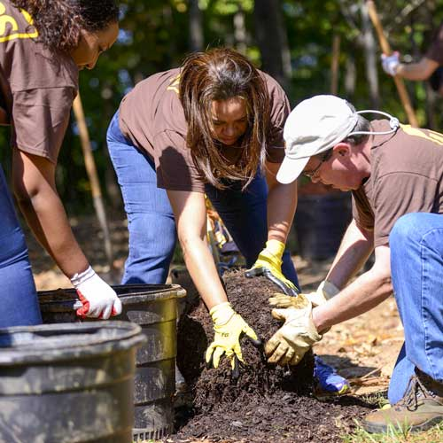 UPS employees prepare the roots of a tree for planting