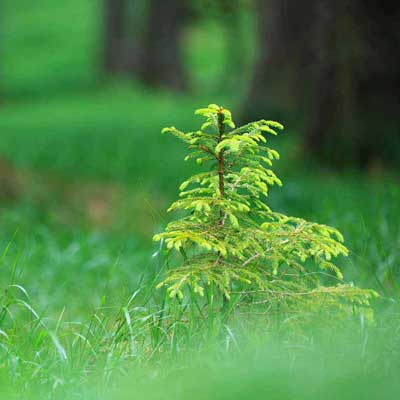 Buy Trees And Learn About Trees Visit Our Online Nursery