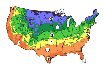 Eastern Redcedar Tree On The Tree Guide At Arbordayorg - Us temperature map abbreviations locations