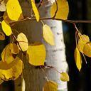 Tree Sleuth