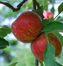 Preservation Orchard Tour