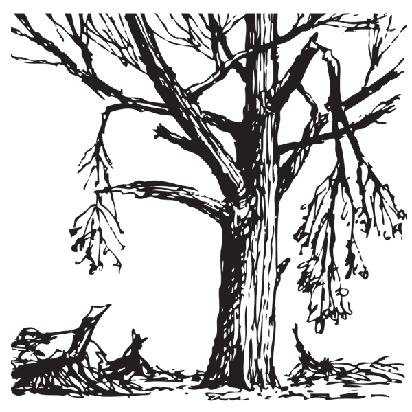 For Homeowners on Arbor Day Coloring Pages