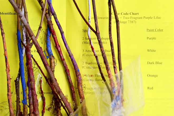 The Benefits Of Bare Root Trees