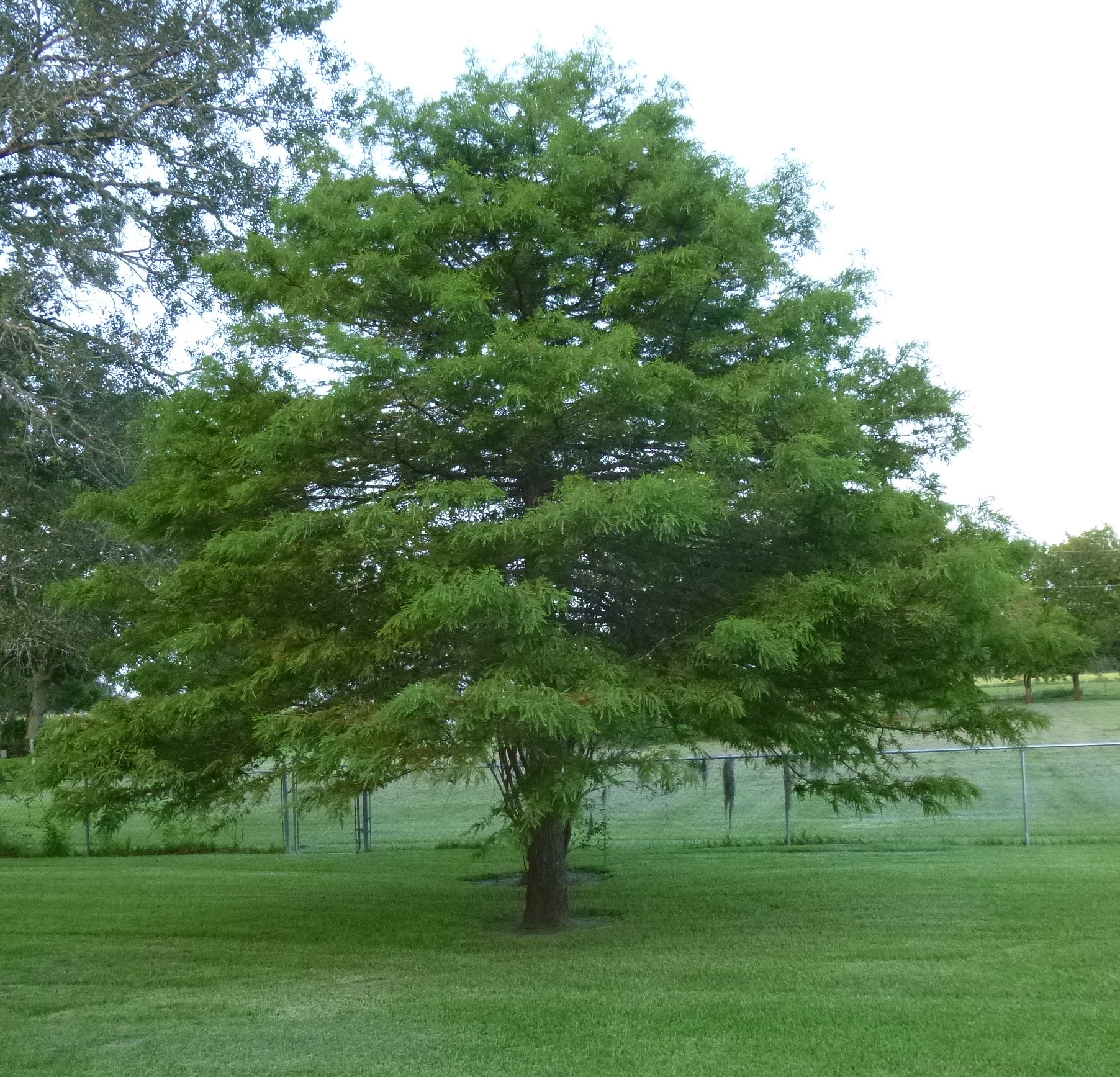 My Tree Gallery - The Arbor Day Foundation