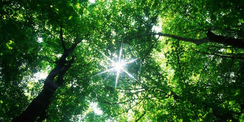 Resultado de imagem para tree