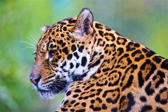 Tropical Rainforest Plants: Definition and Importance