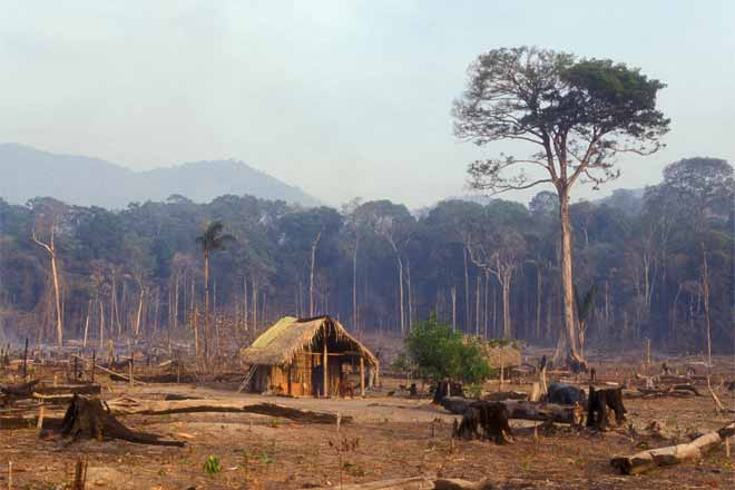 the issue of destruction of the amazon rainforest in brazil