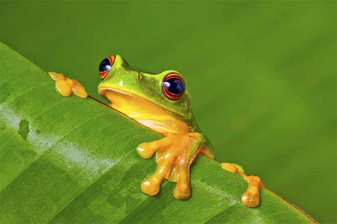 Names and pictures of animals that live in the rainforest
