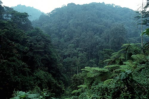 The Effectiveness of Conservation Efforts – 2011 Rain Forest ...