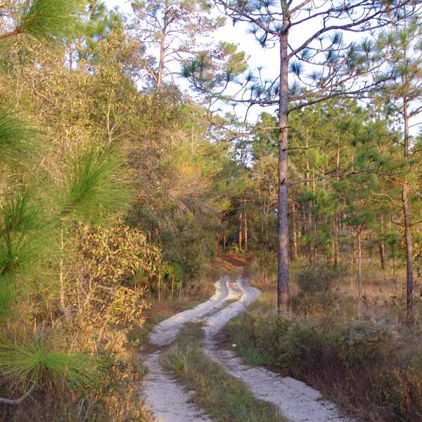 Withlacoochee State Forest