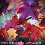 Top 9 Fall Foilage Trees Arbor Day Blog