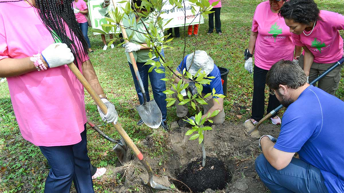 organizing a tree planting project