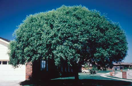 Tree Images Enlarged The Tree Guide At Arborday Org