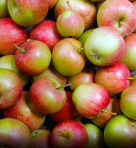 Stayman Winesap Apple—Malus x domestica