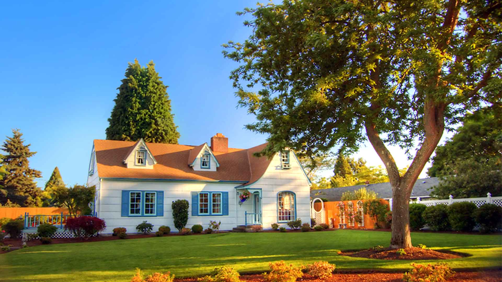 Tree Care Tips for the Tree of Life: Arborvitae | Arbor
