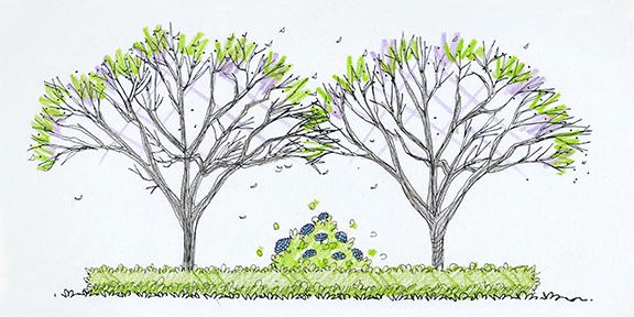 Landscape Design Trees at arbordayorg