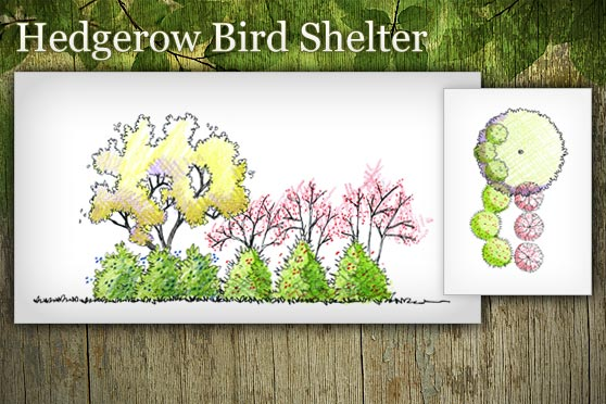 Bird Magnet Hedgerow