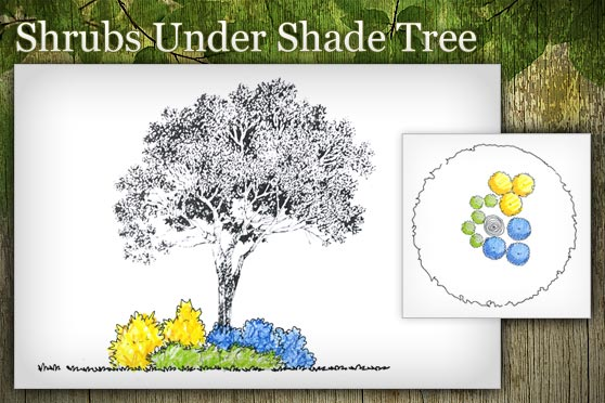 Shrubs Under Shade Tree