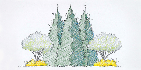 Add contrasting early spring color with the Flowering Green Giant design.  This do-it-yourself landscape design provides a show of spring flowers  highlighted ... - Landscape Design - Trees At Arborday.org