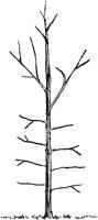 Good Pruning