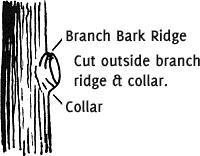 Ridge & Collar