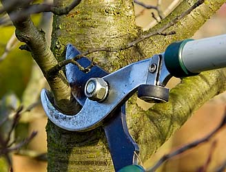 https://www.arborday.org/trees/tips/images/pruning.jpg