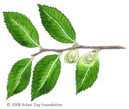 What Tree Is That Online Edition At Arborday Org