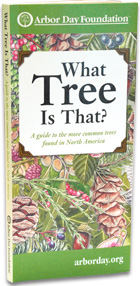 What Tree Is That? book